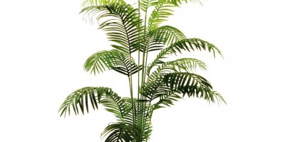 İç Mekan Bitki Önerileri